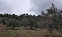 Buildable Land For Sale in Nea Skioni Halkidiki